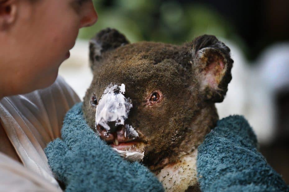 Revolut с дарения за пожарите в Австралия